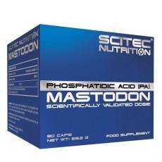 Mastodon – 90 gélules